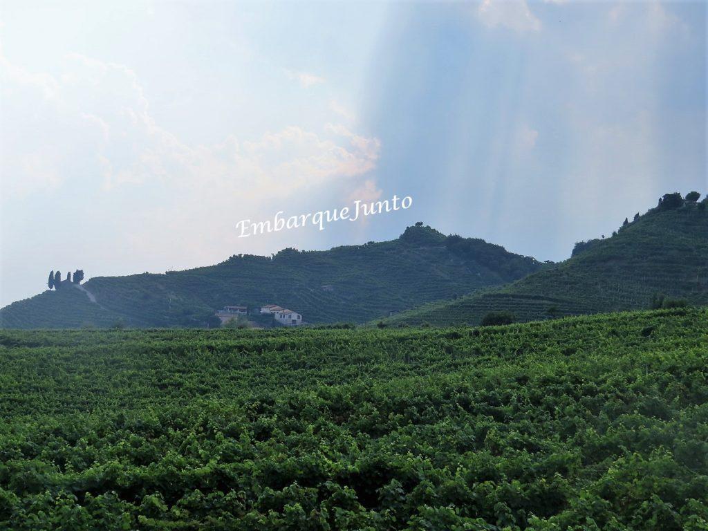 Colinas repletas de vinhas verdejantes e um céu azul rosáceo em Col San Martino - Estrada do Prosecco.